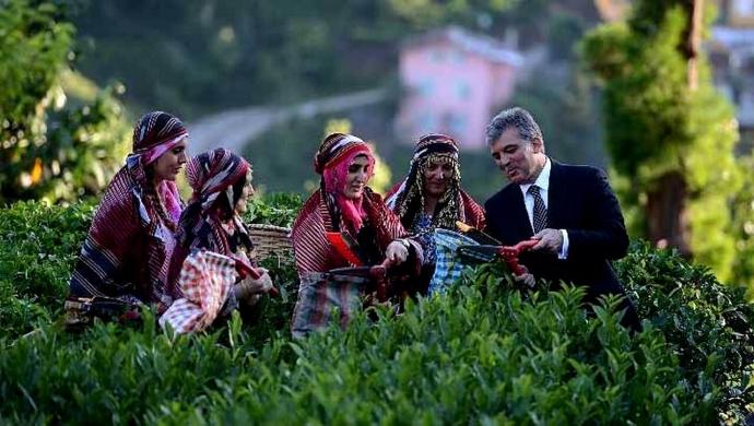ريزا تتصدر المرتبة الأولى في زراعة الشاي في تركيا